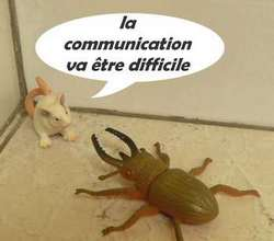 communication difficile